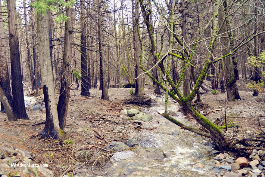 yosemite-forest